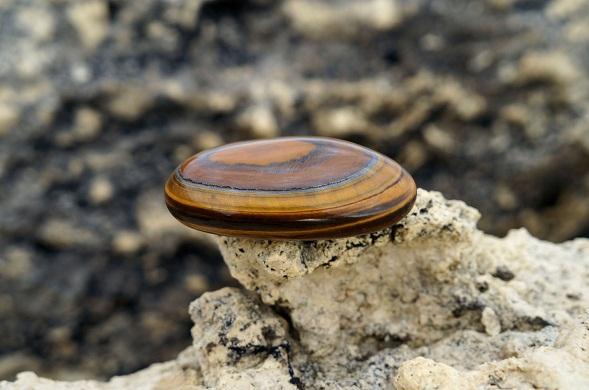 Камень тигровый глаз в природе