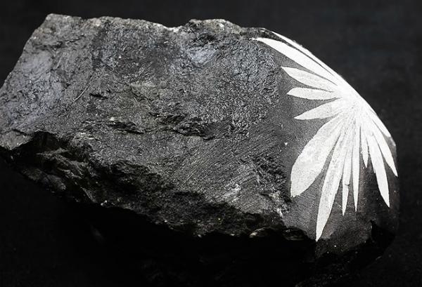 Хризантемиум натуральный